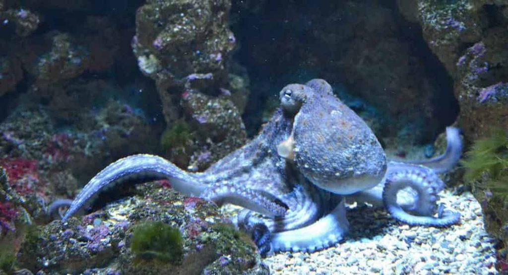 Dream Meaning of Octopus - Dream Interpretation