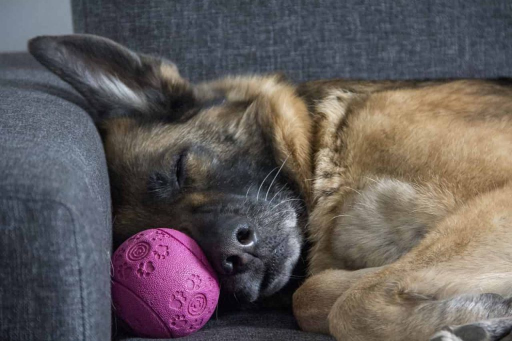 Dream about German Shephard - Meaning and interpretation