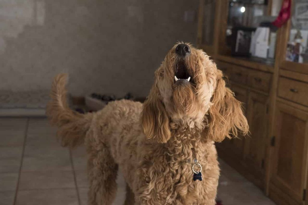 Dream of dog barking at you meaning and interpretation