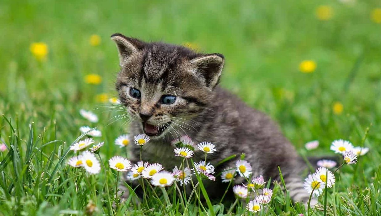 Dreaming About Kittens - What Does It Mean When You Dream About Kittens - Regular dream