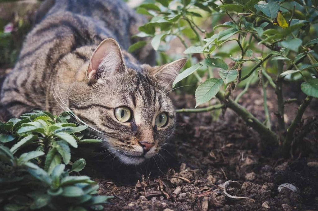Dreams About Cats – Meaning and Interpretation