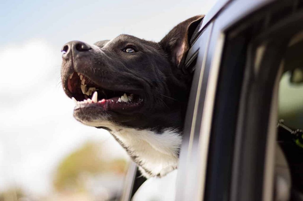 Dreams About Dogs – Meaning and Interpretation