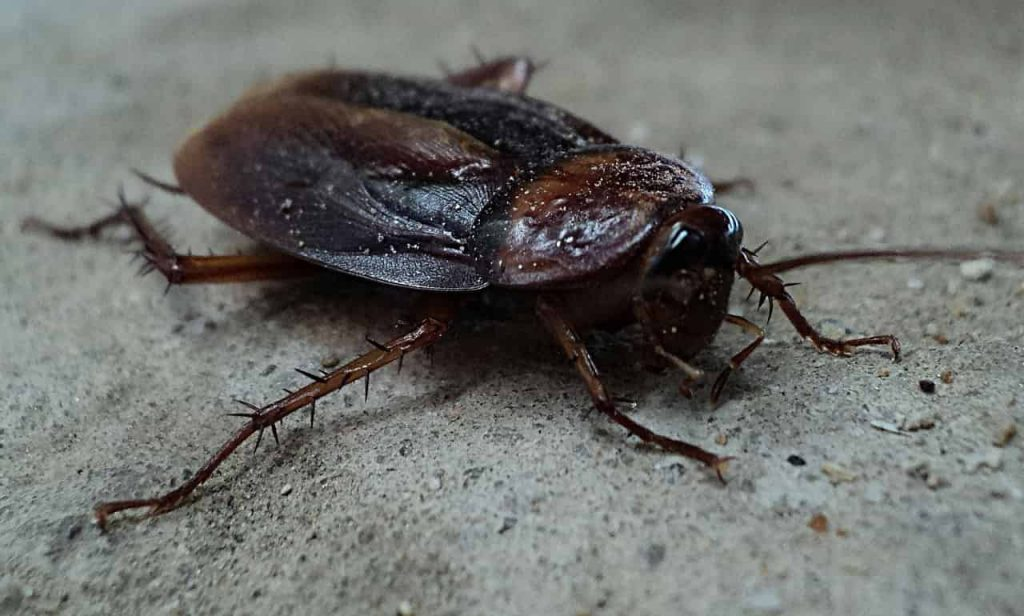 Dreams About Roaches – Meaning and Interpretation