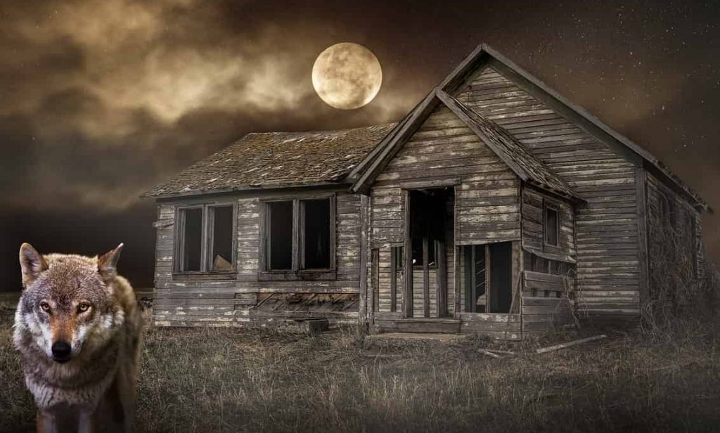 Dreams about Wolves – Interpretation and Meaning