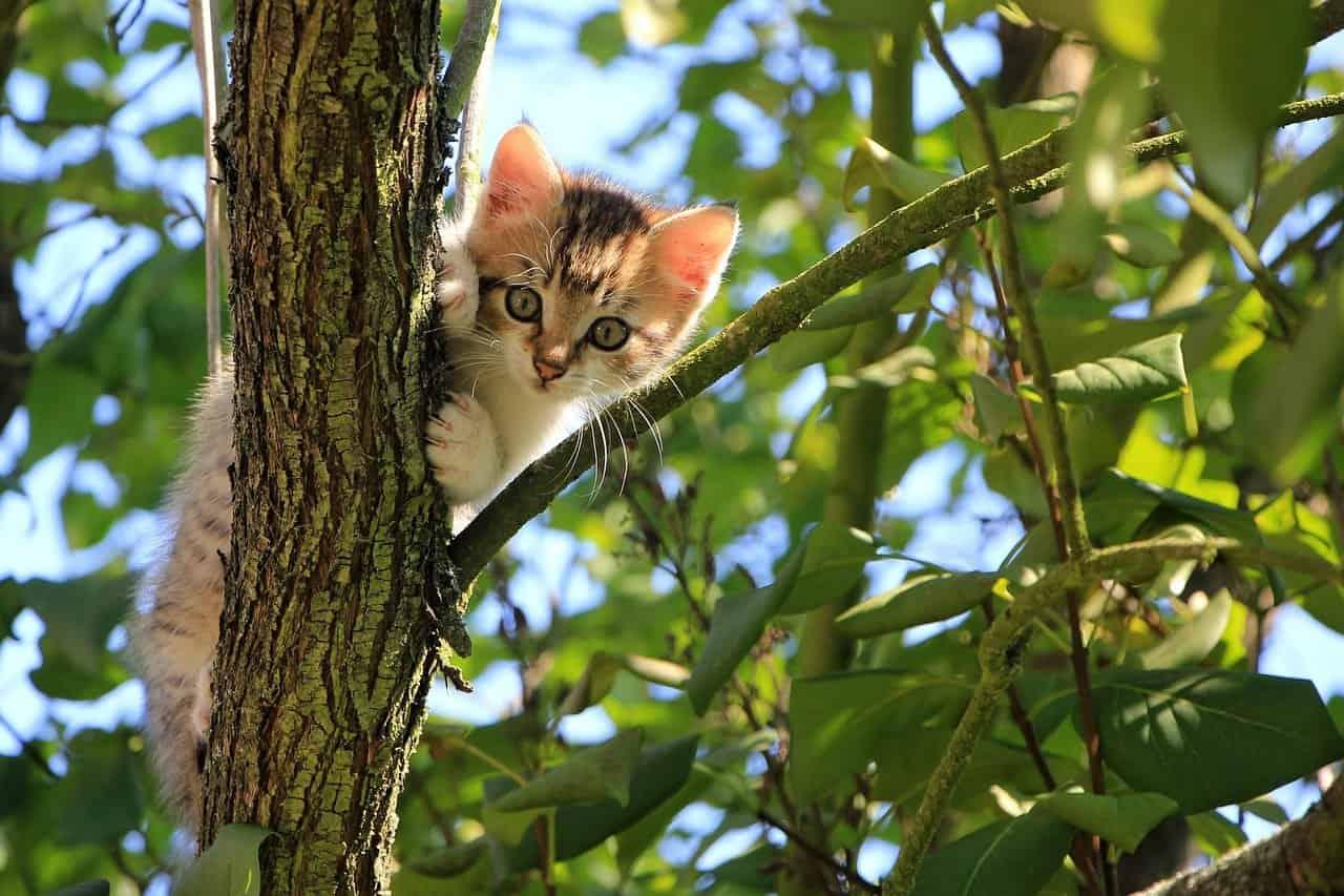 Interpret dream kittens. Meaning dream with kitten Analyze kitten dream