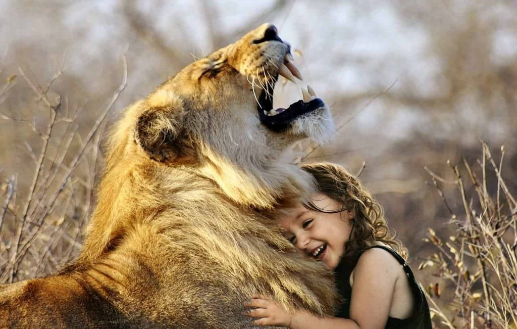 Interpretation of a dream in which you saw «Lion»