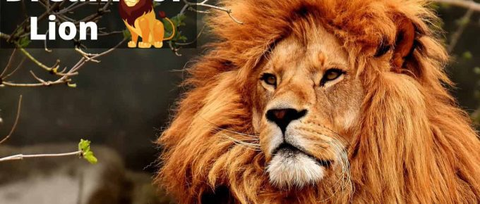Lion Dream Interpretation and Meaning