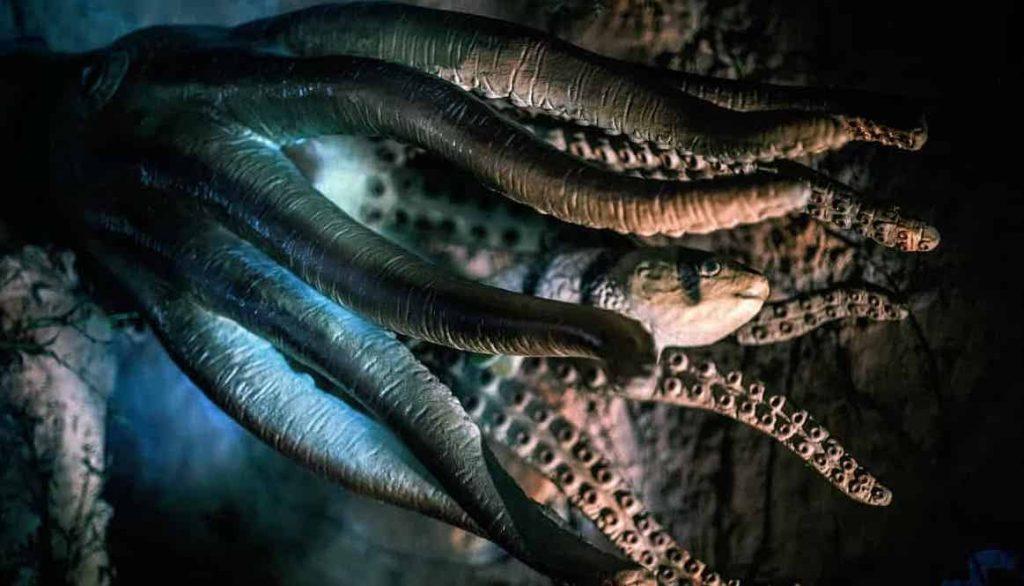Octopus Symbolism, Dreams, and Messages   Regular Dream