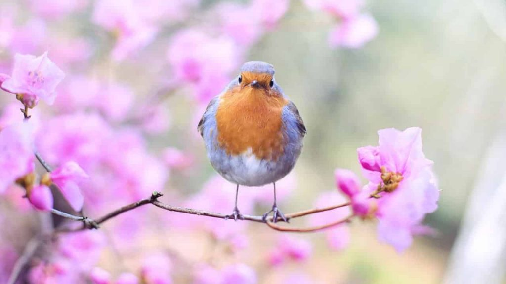 Robins Dreams Meaning - Interpretation and Meaning Dream Dictionary | Animals beautiful, Robin, Animals