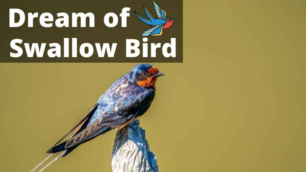 Swallow Bird – Spiritual Meaning and Symbolism