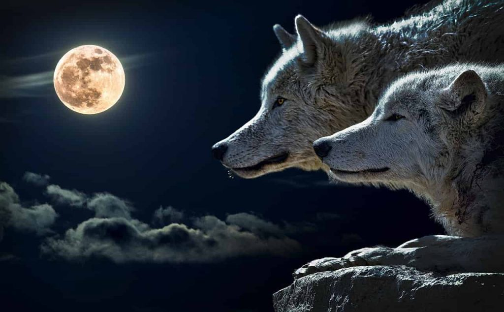 The Meaning of Wolves in Our Dreams - Regular Dream