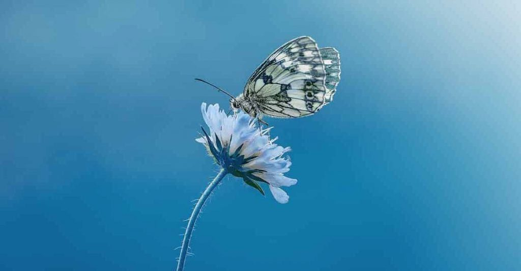 The meaning and symbolism of the word - «Butterfly»