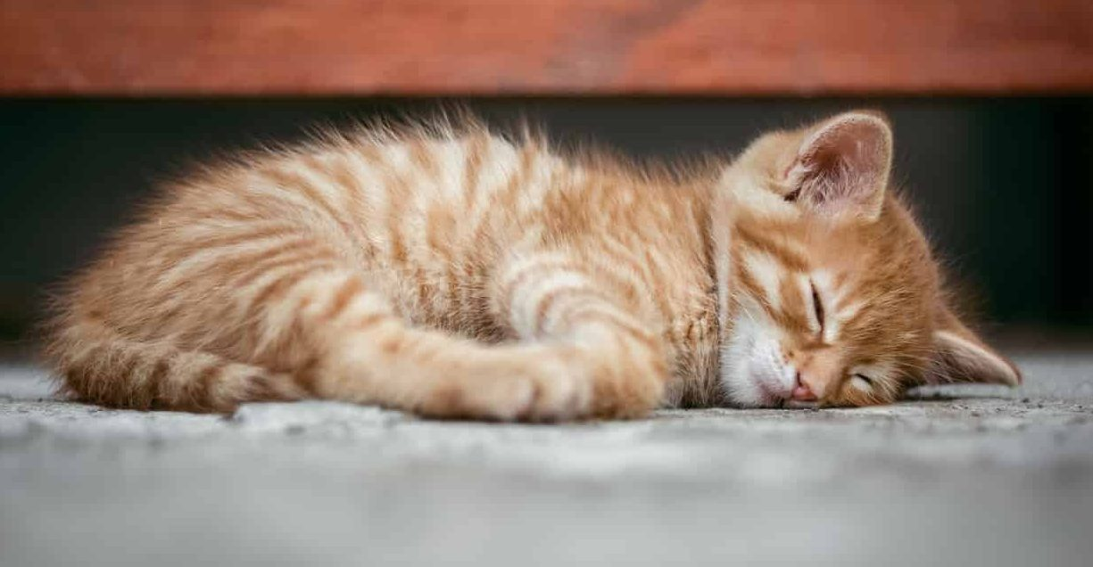 The meaning and symbolism of the word - «Kittens»