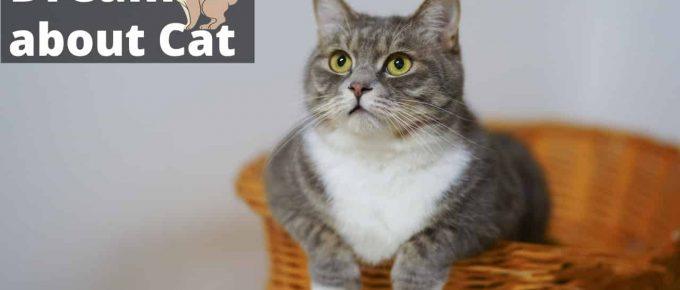 What do cats dream about? | Regular Dream