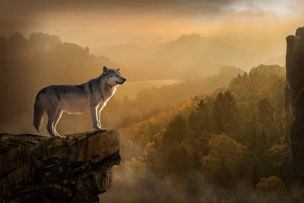 What do dreams about wolf means