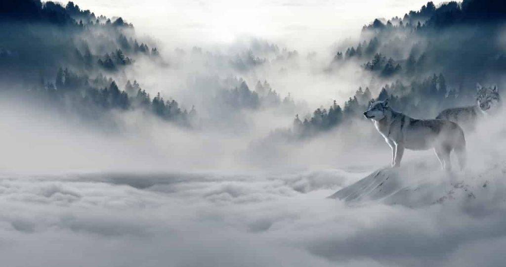 Wolf Dreams | Wolf Dream Interpretation | Wolf Attack