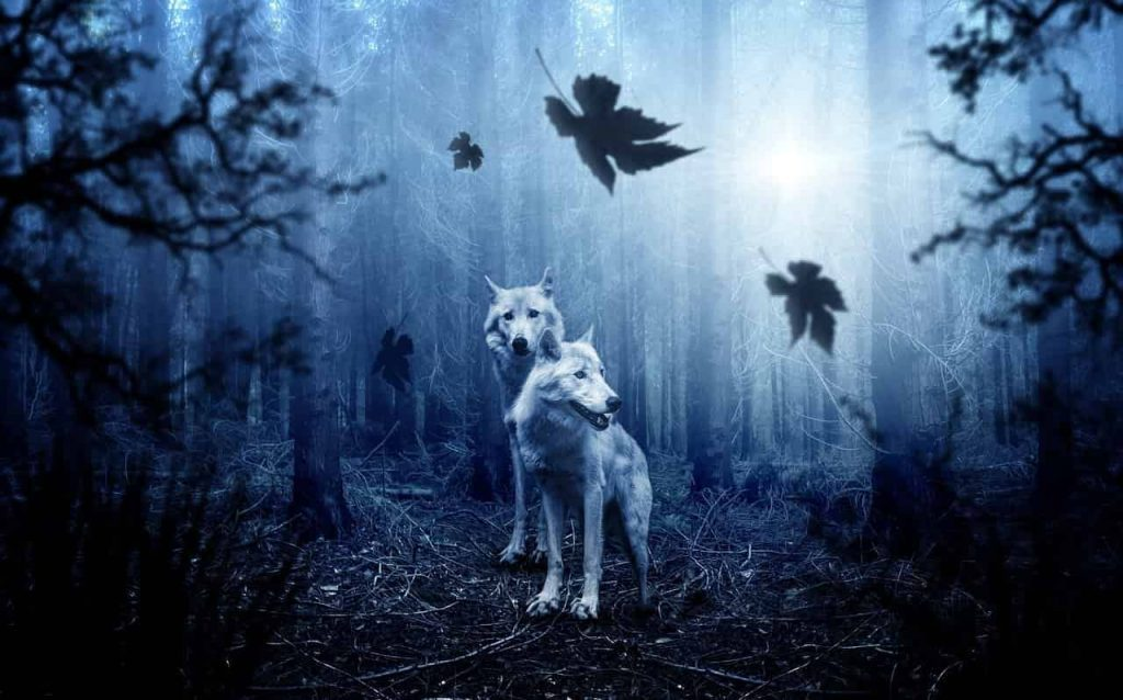 Wolf Spirit Animal Meaning | Regular Dream