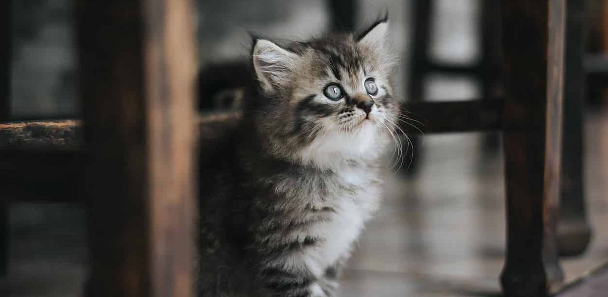 what does it mean when you dream about kittens