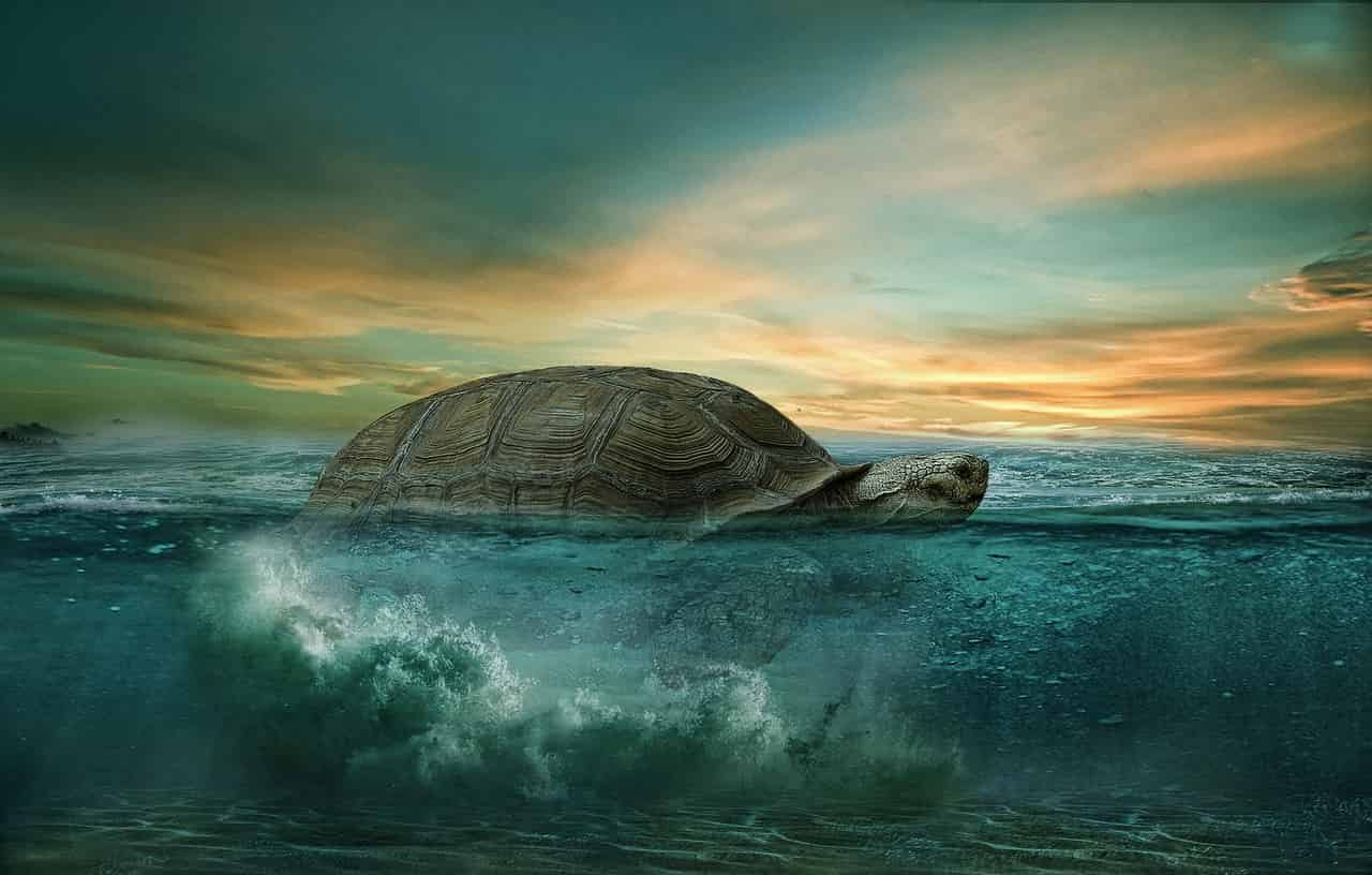 Dream of turtles- what does it mean