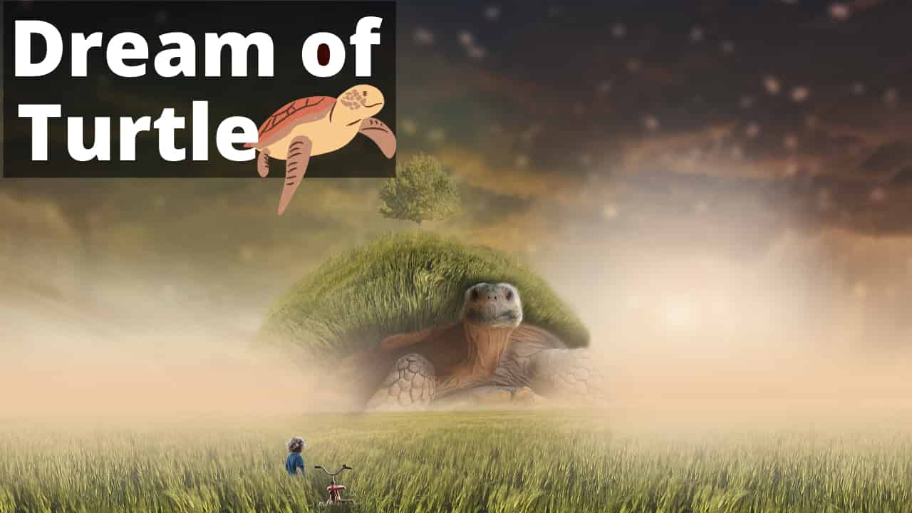 Dreams About Turtles – Interpretation and Meaning