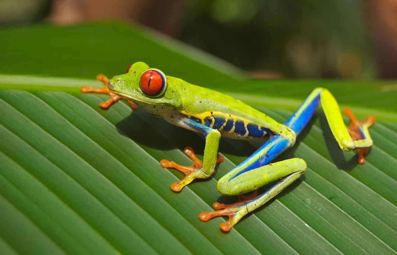Frog Meaning and Symbolism | Regular Dream