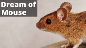 Mouse Dream Interpretation - Best Dream Meaning Analysis & Answer