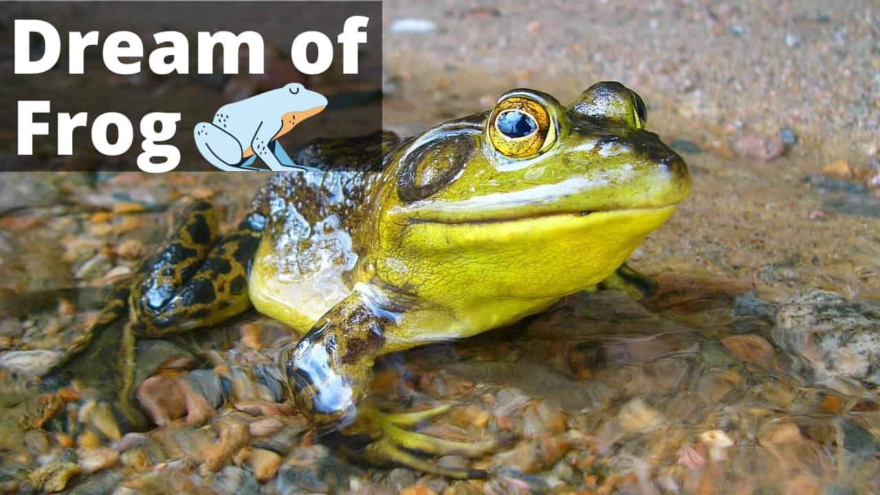 SPIRITUAL MEANING OF FROGS IN DREAM - Regular Dreams