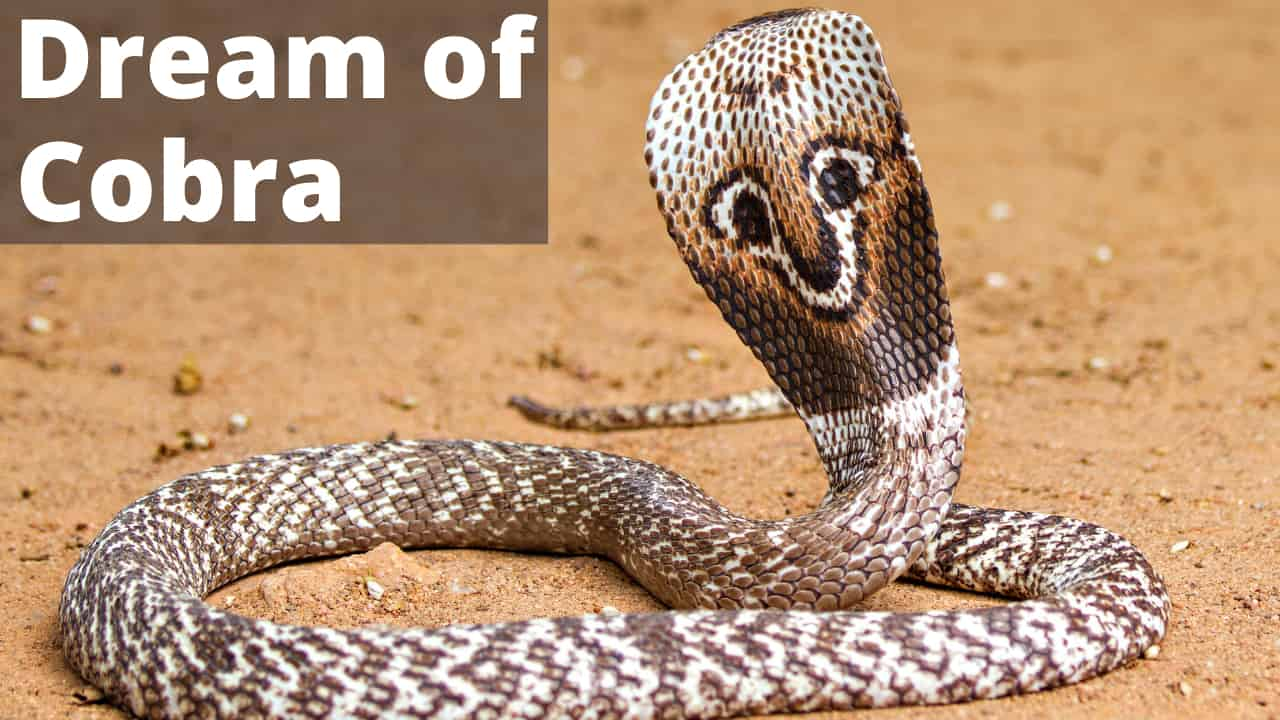 Cobra Dream Meaning | Get Your Dream Interpretation Now!!!
