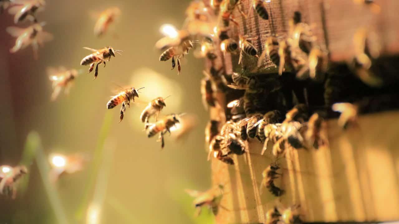 BEE DREAM MEANINGS & SYMBOLISM - Dream Interpretation Guide