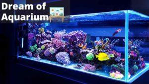 Dream About Aquarium - Meaning, Interpretation, symbolizm, and sign