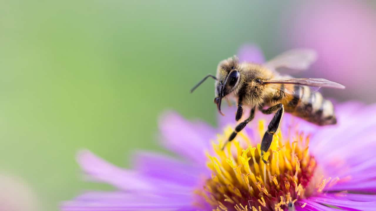 Dream Interpretation of Bee and what does dream about Bees mean?