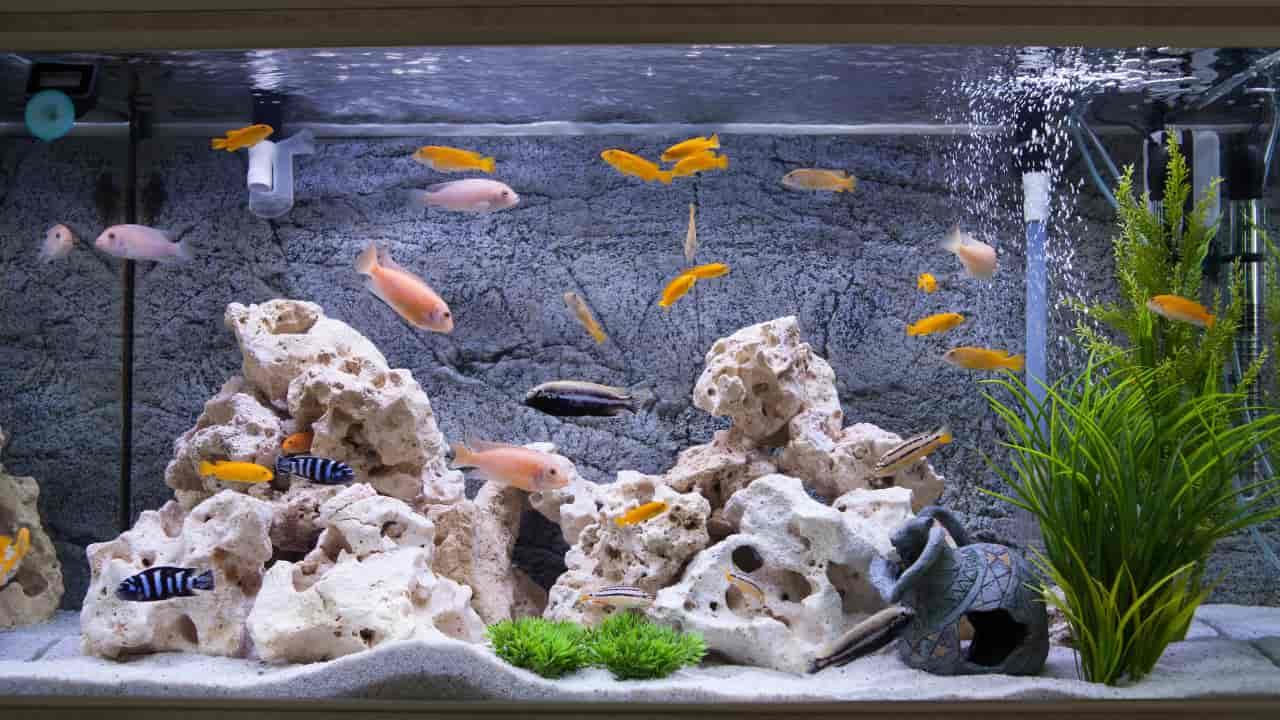 Dream interpretation about Aquarium - What does dream about aquarium means?