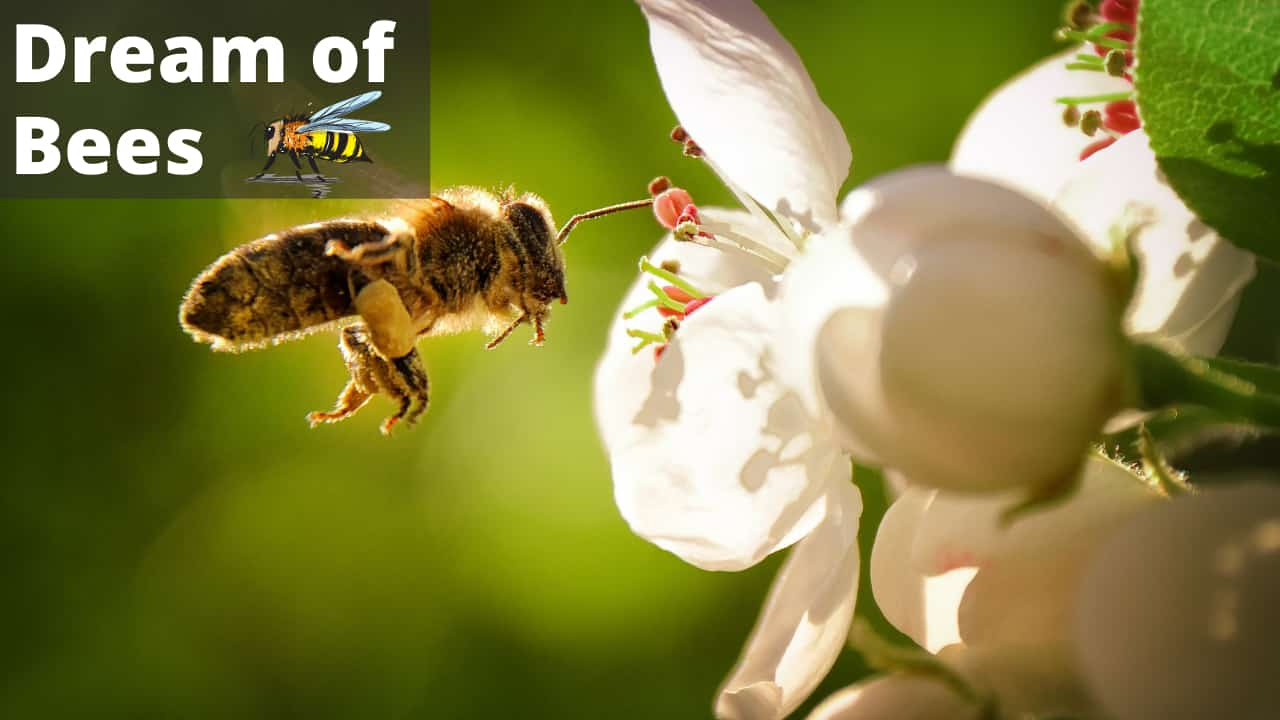 Dreaming of Bees-Meaning & Symbolism of Bee Dreams