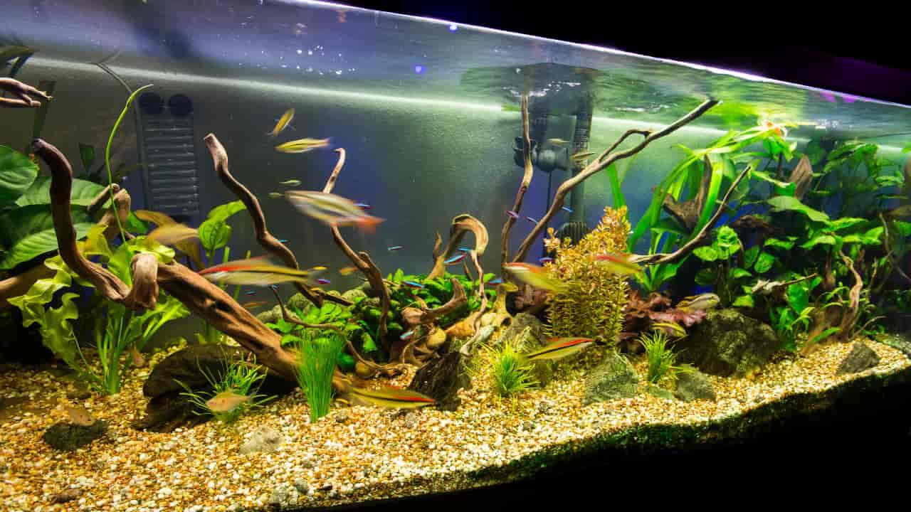 Dreaming of aquarium meaning, symbolizm and interpretation