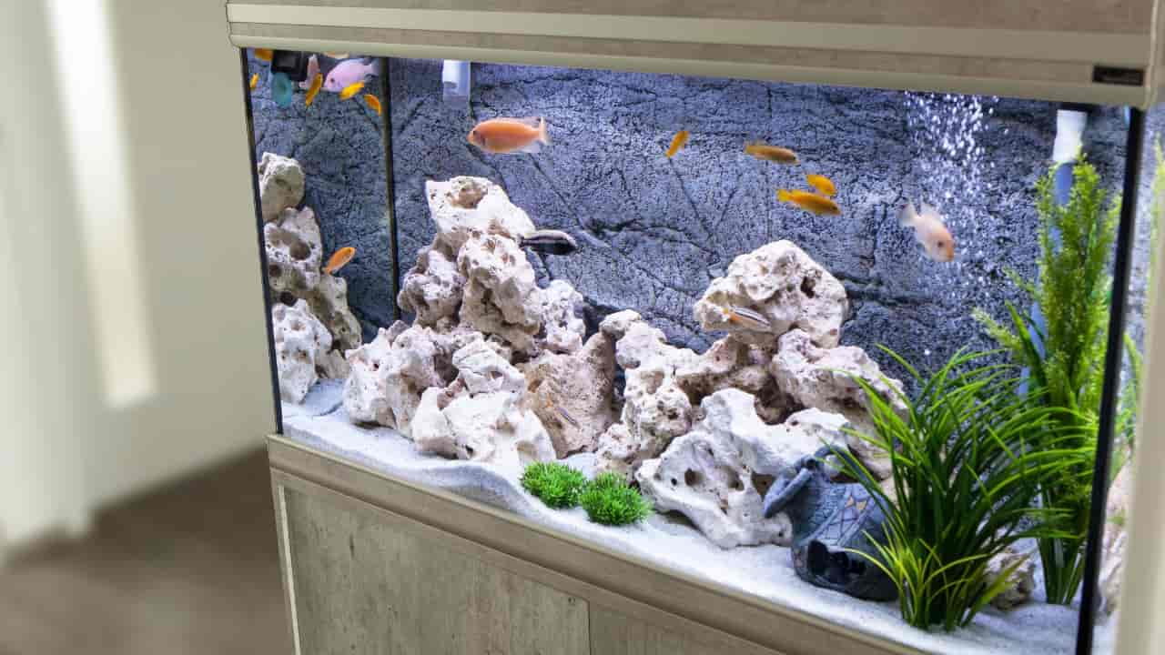 I dreamed about aquarium, what does that means?