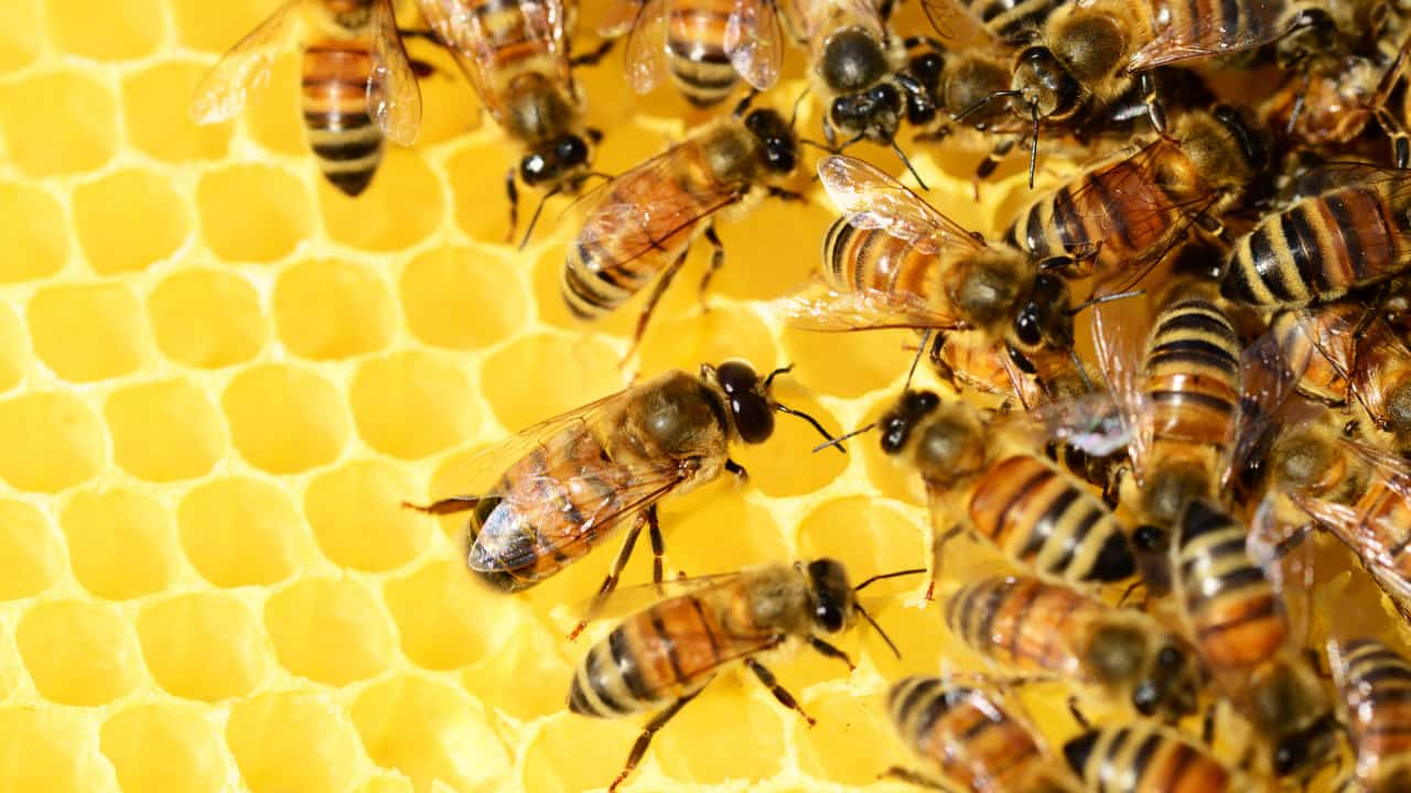 The Possible Meanings of Dreams About Bees - Regular Dream