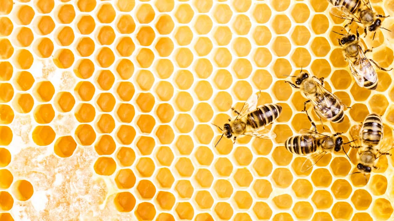 What Dream About Bee Means - Meaning and Interpretation