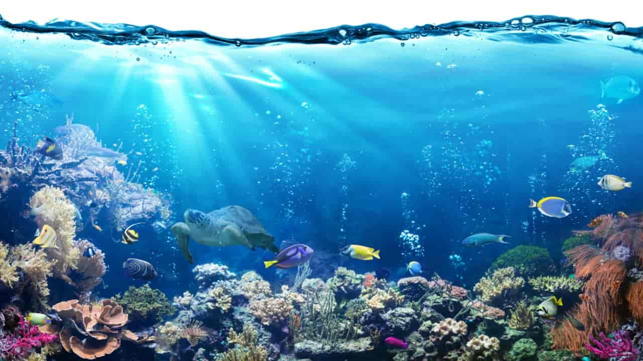 What do dreams about aquarium means?