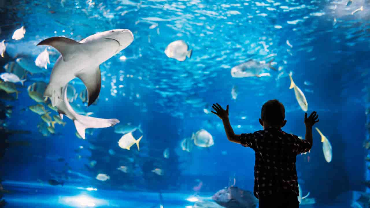 What does dream about Aquarium means and how to interpret it