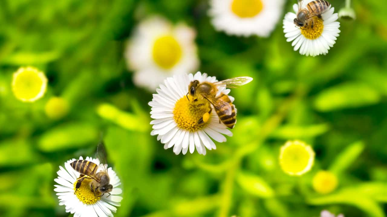 What does dream about bees means and how does it affect my waking life?