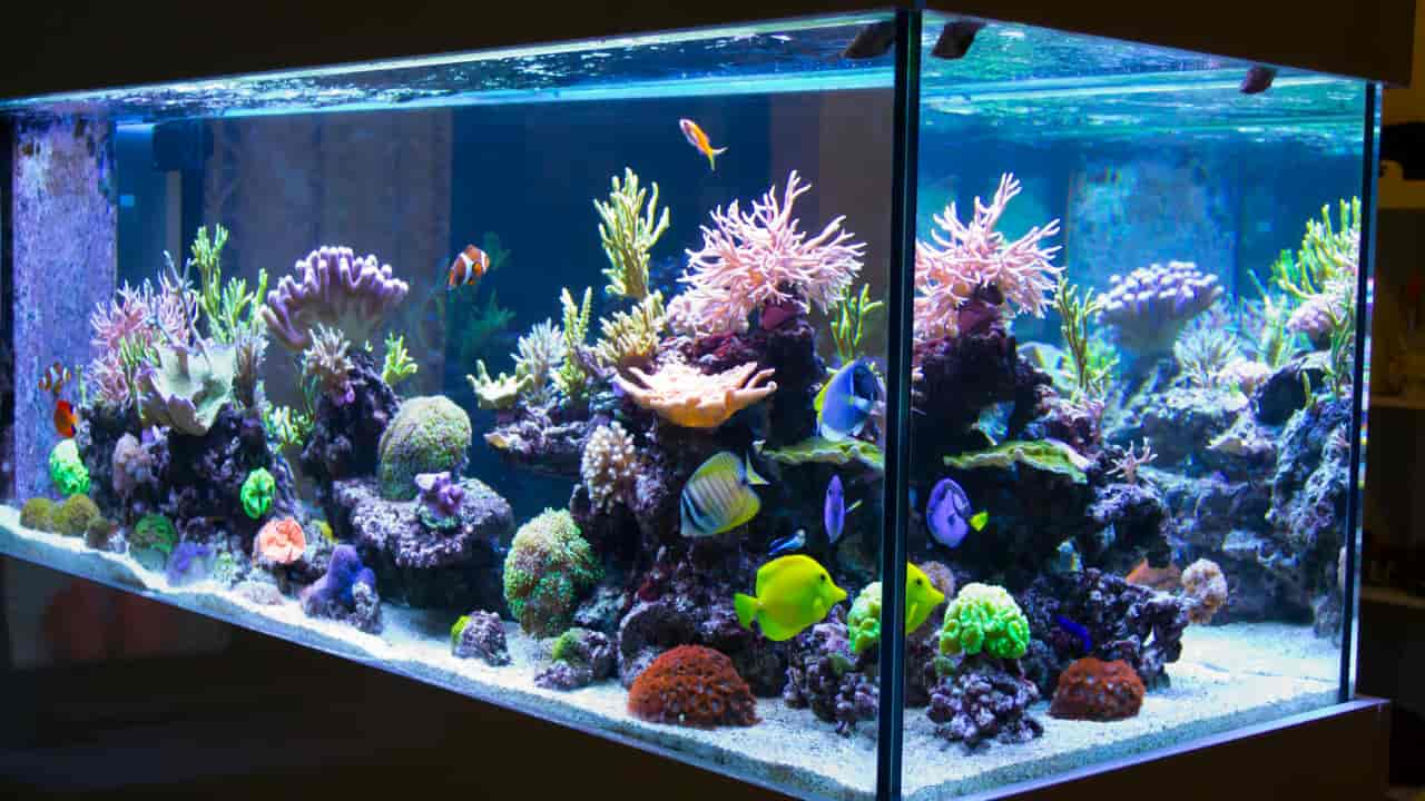Why Do I keep dreaming about aquarium and what does it symbolizes?