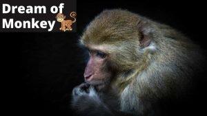 Monkey in Dream - Meaning, Interpretation and Symbolizm