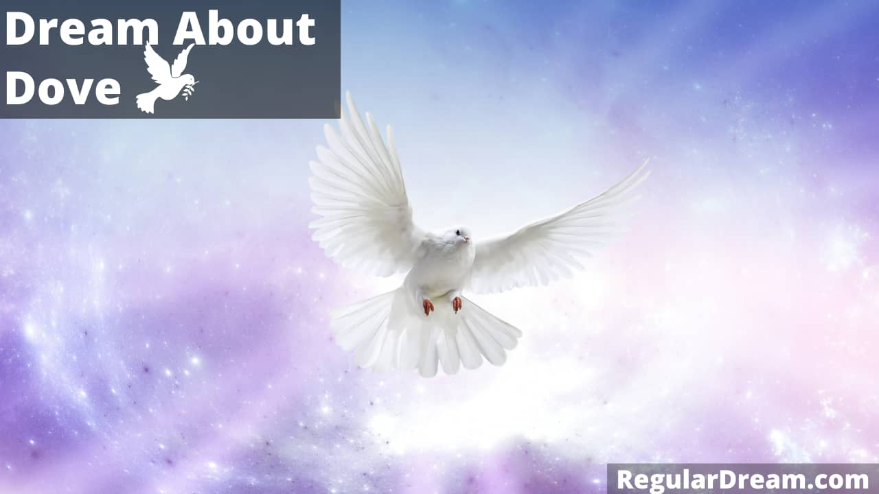 Dove Dream Meaning, Interpretation, Symbolizm and facts that you must know to interpret your dove dream
