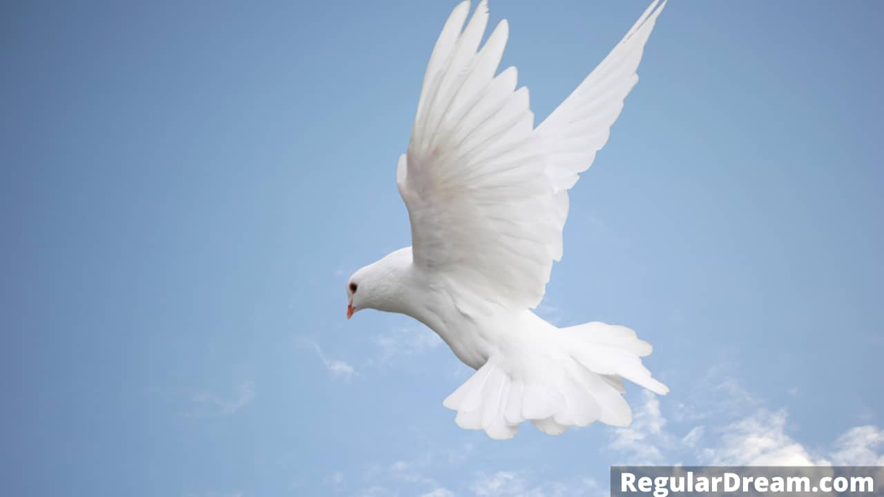 Dove in Dream - What does dove in dream means?