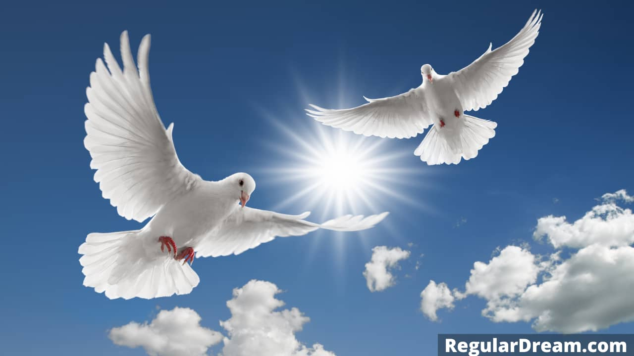 Dream about Dove- Meaning and Interpretation