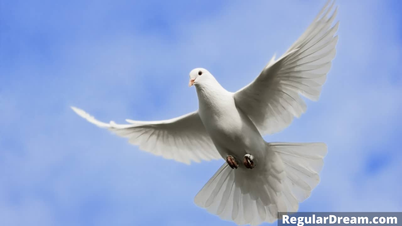 Dream about Flying dove- What does flying dove dream means? Regular Dream
