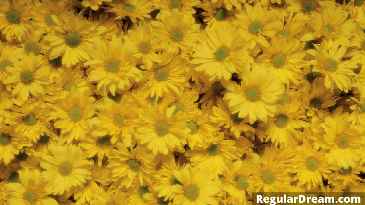 Dream about yellow flowers- meaning and interpretation
