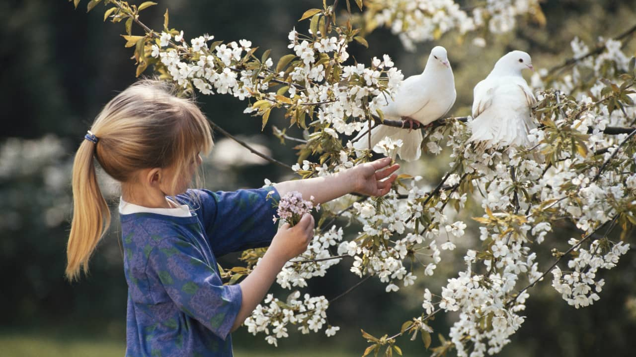 Dream of a Dove at home - Meaning and Interpretation