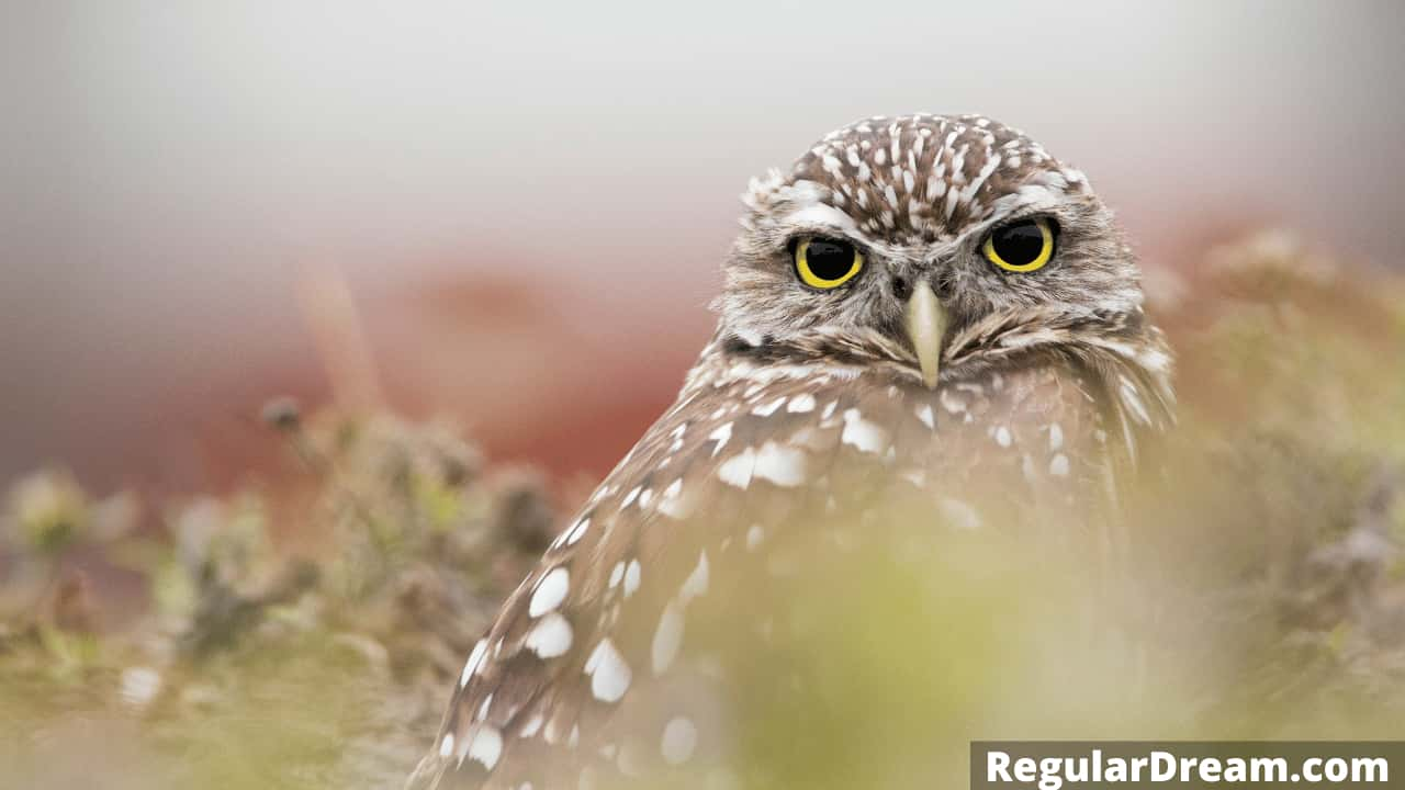What Owl in dream symbolises - Meaning and interpretation