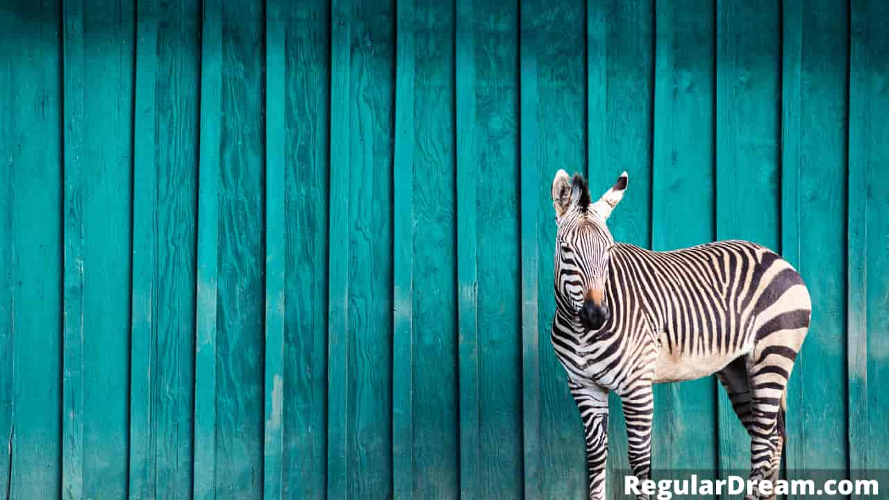 Why do I keep dreaming about Zebra? Dream Interpretation and Meaning